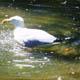 Zoo di Anversa - Zoo Antwerpen 006