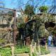 Zoo di Anversa - Zoo Antwerpen 008