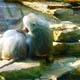 Zoo di Anversa - Zoo Antwerpen 010