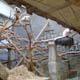 Zoo di Anversa - Zoo Antwerpen 013