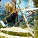 Zoo di Anversa - Zoo Antwerpen 014