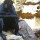 Zoo di Anversa - Zoo Antwerpen 015