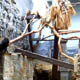Zoo di Anversa - Zoo Antwerpen 016