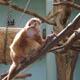 Zoo di Anversa - Zoo Antwerpen 019