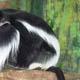 Zoo di Anversa - Zoo Antwerpen 022