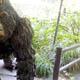 Zoo di Anversa - Zoo Antwerpen 026