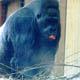 Zoo di Anversa - Zoo Antwerpen 028