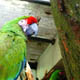 Zoo di Anversa - Zoo Antwerpen 031