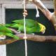 Zoo di Anversa - Zoo Antwerpen 036