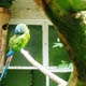 Zoo di Anversa - Zoo Antwerpen 037