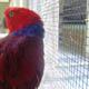 Zoo di Anversa - Zoo Antwerpen 039