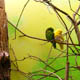 Zoo di Anversa - Zoo Antwerpen 045