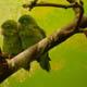 Zoo di Anversa - Zoo Antwerpen 046