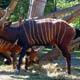 Zoo di Anversa - Zoo Antwerpen 060