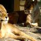 Zoo di Anversa - Zoo Antwerpen 062