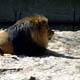 Zoo di Anversa - Zoo Antwerpen 063
