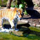 Zoo di Anversa - Zoo Antwerpen 066