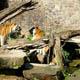Zoo di Anversa - Zoo Antwerpen 067