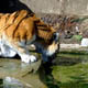 Zoo di Anversa - Zoo Antwerpen 069