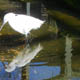 Zoo di Anversa - Zoo Antwerpen 074