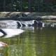 Zoo di Anversa - Zoo Antwerpen 078