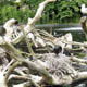 Zoo di Anversa - Zoo Antwerpen 084