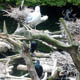 Zoo di Anversa - Zoo Antwerpen 085