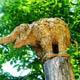 Zoo di Anversa - Zoo Antwerpen 090