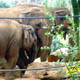 Zoo di Anversa - Zoo Antwerpen 094