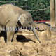 Zoo di Anversa - Zoo Antwerpen 095
