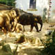Zoo di Anversa - Zoo Antwerpen 096