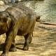 Zoo di Anversa - Zoo Antwerpen 098