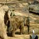 Zoo di Anversa - Zoo Antwerpen 100