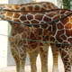 Zoo di Anversa - Zoo Antwerpen 101