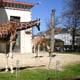 Zoo di Anversa - Zoo Antwerpen 105