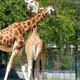 Zoo di Anversa - Zoo Antwerpen 107