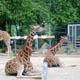 Zoo di Anversa - Zoo Antwerpen 108
