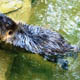Zoo di Anversa - Zoo Antwerpen 113
