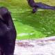 Zoo di Anversa - Zoo Antwerpen 115