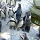 Zoo di Anversa - Zoo Antwerpen 116