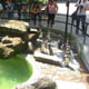 Zoo di Anversa - Zoo Antwerpen 119