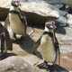 Zoo di Anversa - Zoo Antwerpen 120