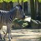 Zoo di Anversa - Zoo Antwerpen 124