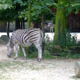 Zoo di Anversa - Zoo Antwerpen 125