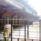 Zoo di Anversa - Zoo Antwerpen 126
