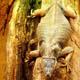 Zoo di Anversa - Zoo Antwerpen 140