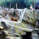 Zoo di Anversa - Zoo Antwerpen 153
