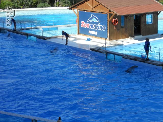 Zoomarine (Roma) Torna gratis a Zoomarine e Aquafelix