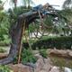 Busch Gardens Tampa 016