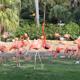 Busch Gardens Tampa 029